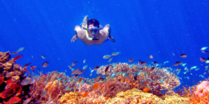 Snorkeling And Diving Menjangan Tour